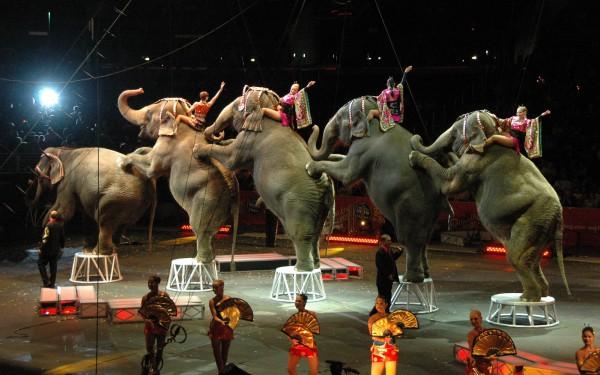 Слоны стареют, зритель неидет— Старейший цирк США