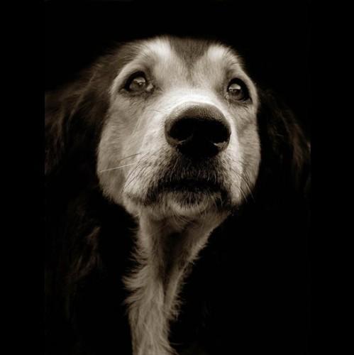 В воскресенье состоится благотворительный концерт в поддержку бездомных животных Киева