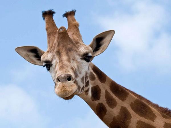 В пятницу, 12 июля, в Зоопарке пройдет День фотографа