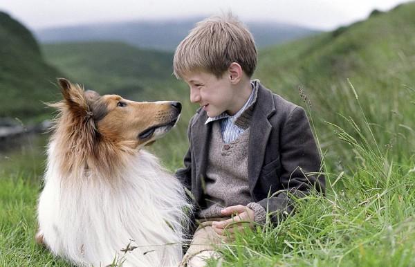 Лучшие фильмы о животных.