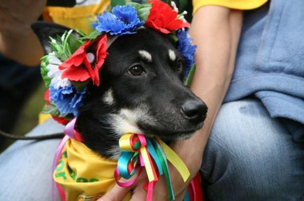 15 июня в Киеве пройдет Кубок Барбоса - выставка беспородных собак