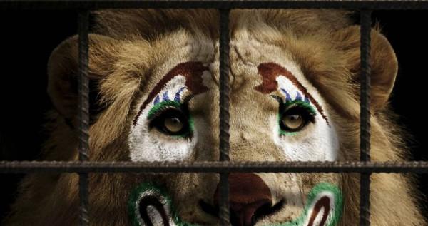 В Киеве пройдет Митинг за цирк без животных
