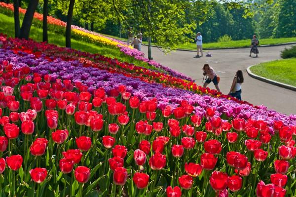 В апреле в Киеве пройдет III городская выставка тюльпанов