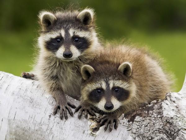 Столичный зоопарк 1 июня будет работать бесплатно для всех детей