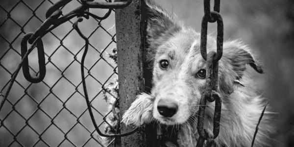 Animal Ads Day покажет лучшую социальную рекламу о братьях наших меньших