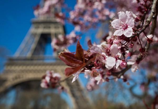 Французская весна 2017 стартует уже 1 апреля