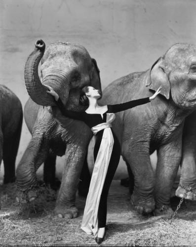 Не самая дорогая, но, пожалуй, одна из самых известных фотографий в мире под названием Довима и слоны была сделана Ричардом Аведоном для рекламы новой коллекции Кристиана Диора Осень-зима – 1955. Была продана в 2010 г. за $1 151 976.