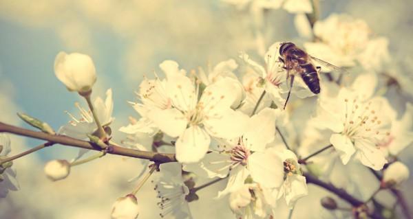 20 важных дел весны.