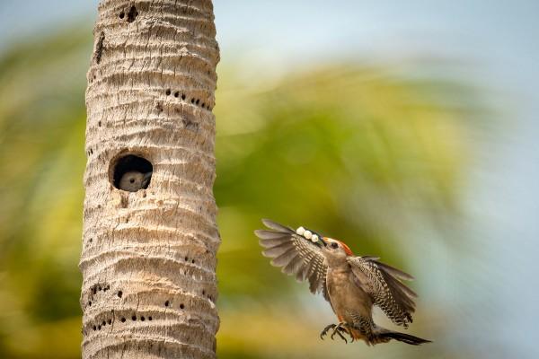 Выбраны лучшие снимки птиц
