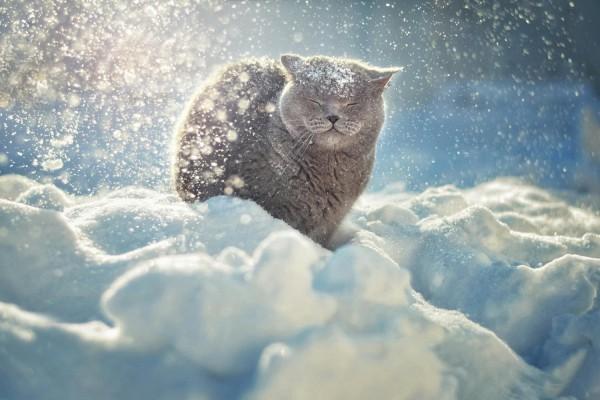 Синоптики прогнозируют морозы в Киеве
