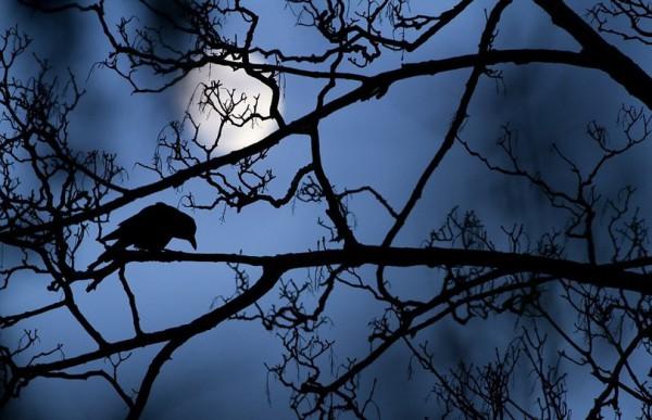 Лучшее фото в категории Молодой фотограф. ©Gideon Knight / Wildlife Photographer of the Year