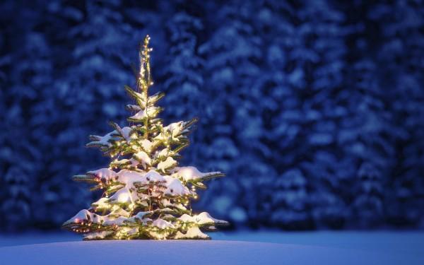 Сегодня все чаще отказываются от срубленной елки на Новый год