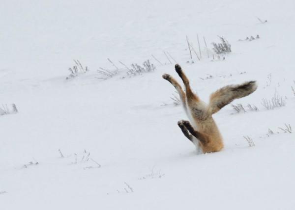 Фотография, победившая в конкурсе Comedy Wildlife Photography Awards 2016