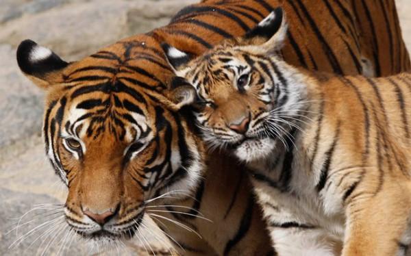 Зоопарк в Киеве теперь работает без выходных