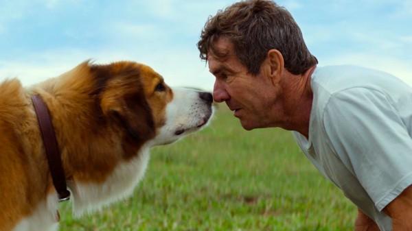 Кадр из фильма Жизнь и цель собаки, который выходит в прокат уже в чеверг