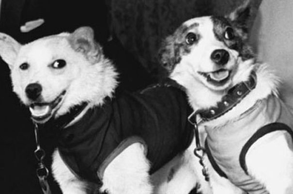Белка и Стрелка - первые космонавты