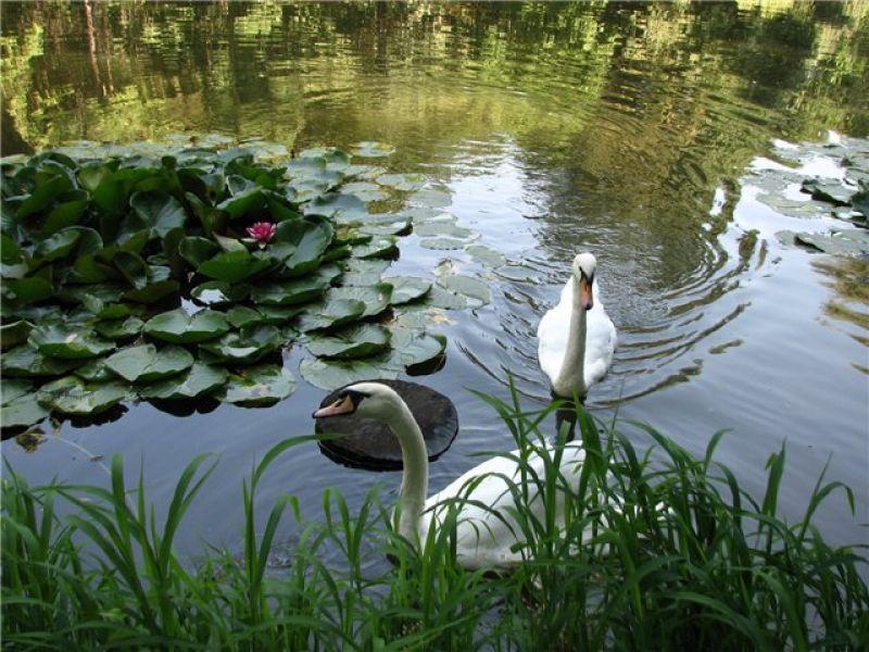 ТОП-10 лучших парков Украины 2/2a/593fd75127866623ce0518ff276c52a2.jpg
