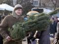 И никаких штрафов: Как украинцы зарабатывают на продаже елок