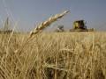 Получив миллиардный кредит, Украина в этом году направит миллионы тонн зерна в Поднебесную