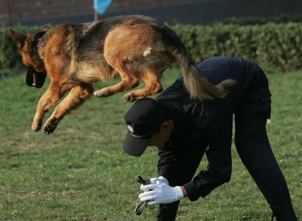 К обучению собак в Одесской области относятся серьезно