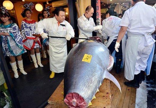 Огромная рыба была выловлена в местечке Ома, северная префектура