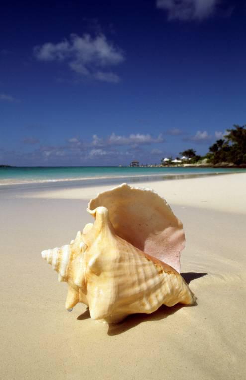 Остров Rooster Cay