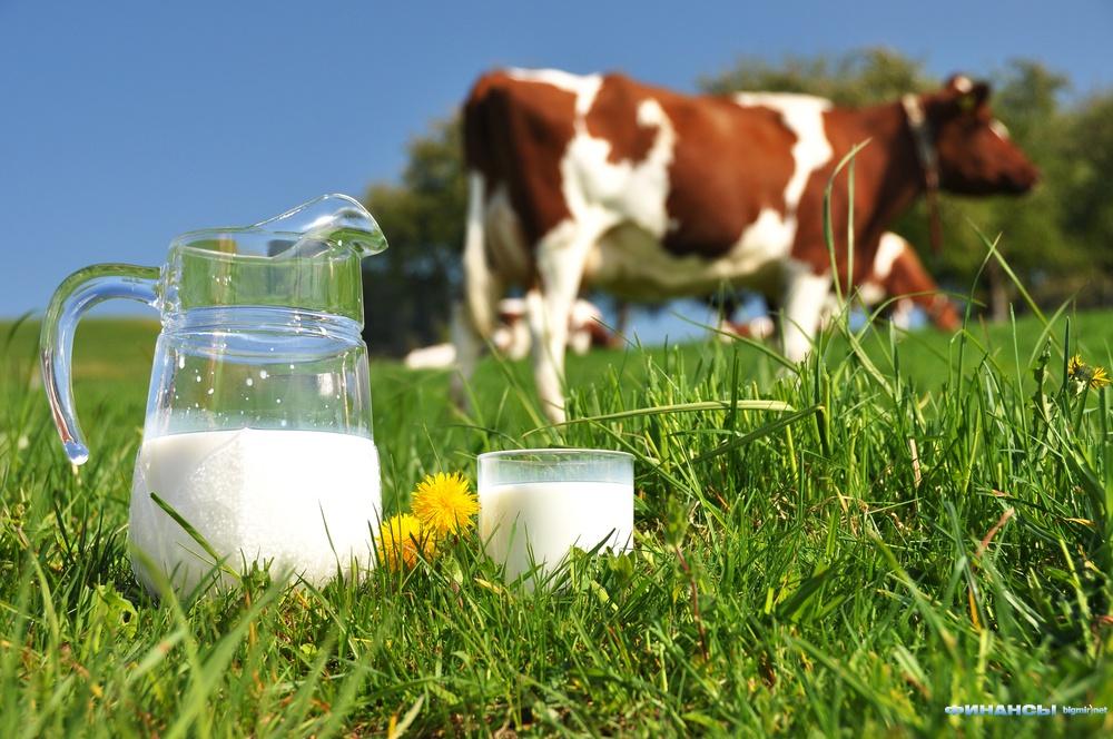 Беларусь покроет украинскую долю российского молочного рынка