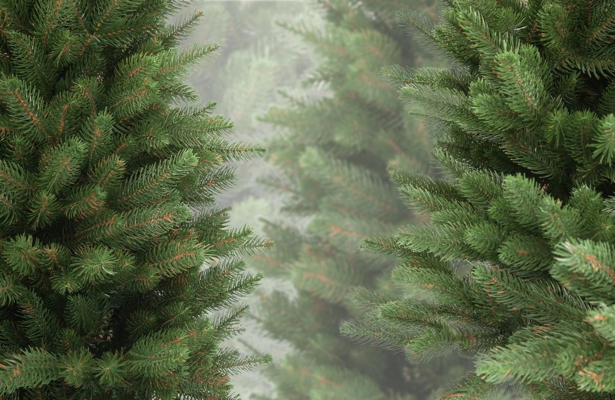 Цены на живые елки стартуют от 60 грн.