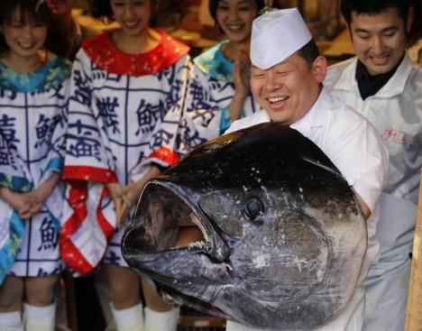 Голубой Тунец (bluefin tuna) ценится за превосходные вкусовые качества