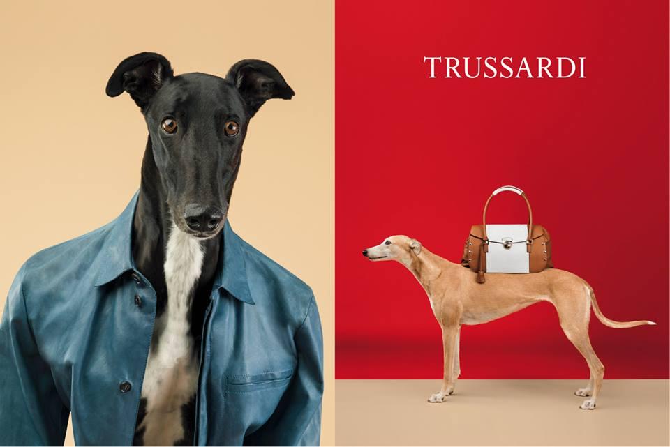 Грейхаунд - новые лица рекламной кампании Trussardi