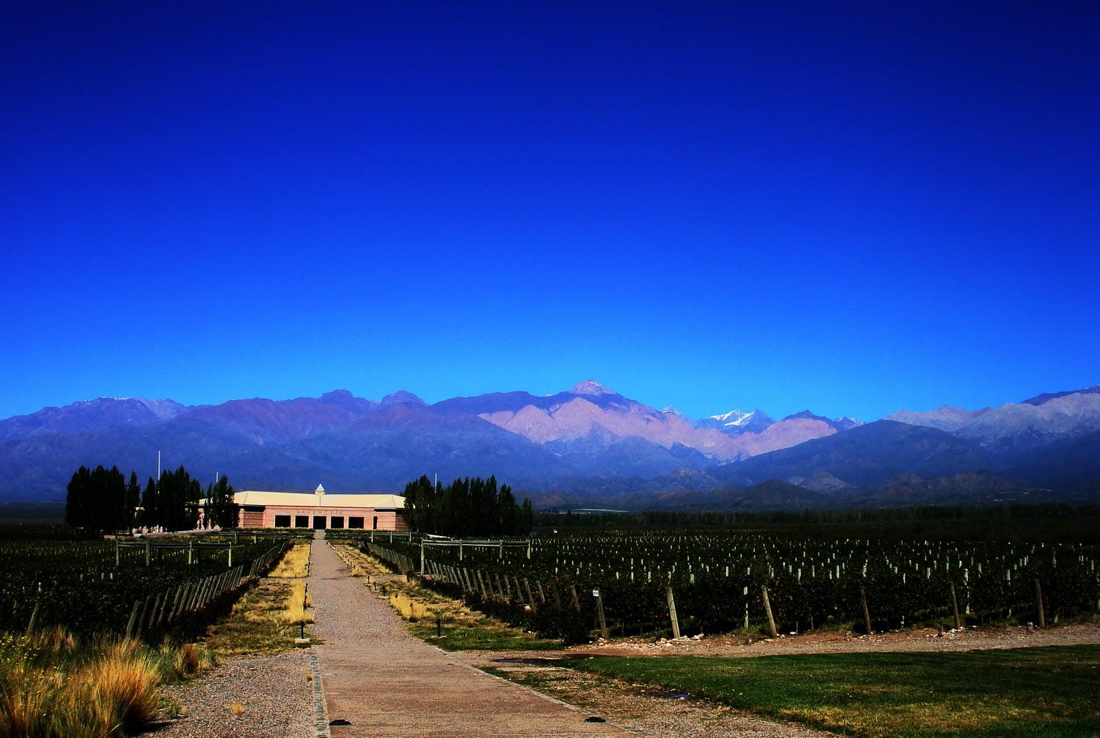 Виноградники в долине Юко