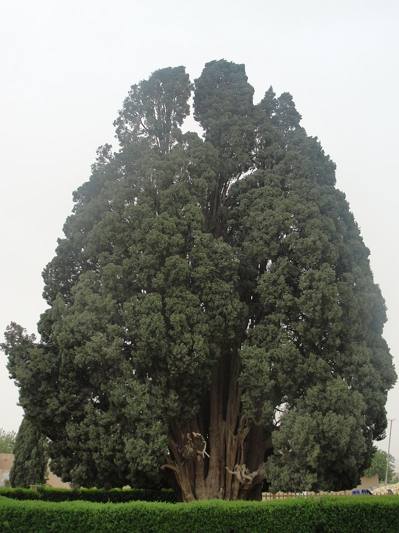 Зороастрийский Сарв в Иране
