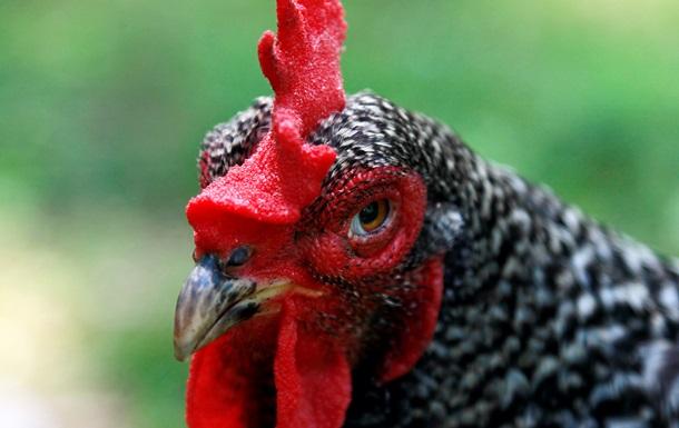 Агрохолдинг Мироновский хлебопродукт начал поставки курятины в ЕС