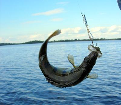 Рыбалка Януковича обошлась казне в 6,55 млн. долларов