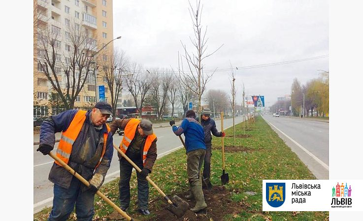За часть посаженных деревьев и кустов заплатили спонсоры