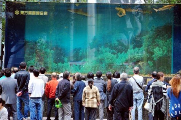 Огромный аквариум пользовался популярностью в Шанхае
