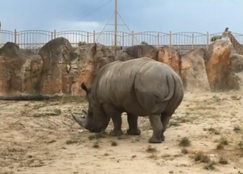 """Зоопарк """"12 месяцев"""" для двоих"""