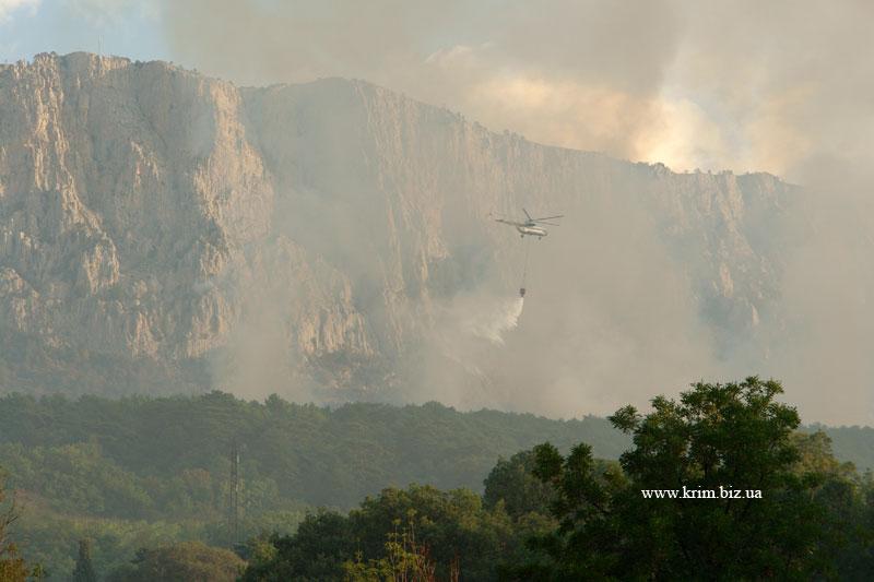 За уничтоженный лес харьковчанин должен $10 млн