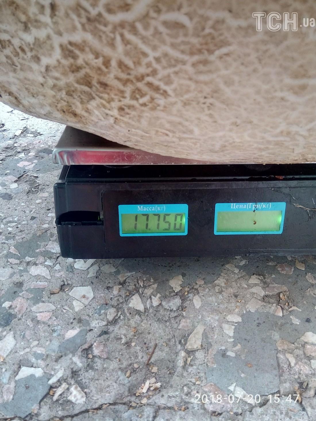 Вес гиганта - почти 18 кг