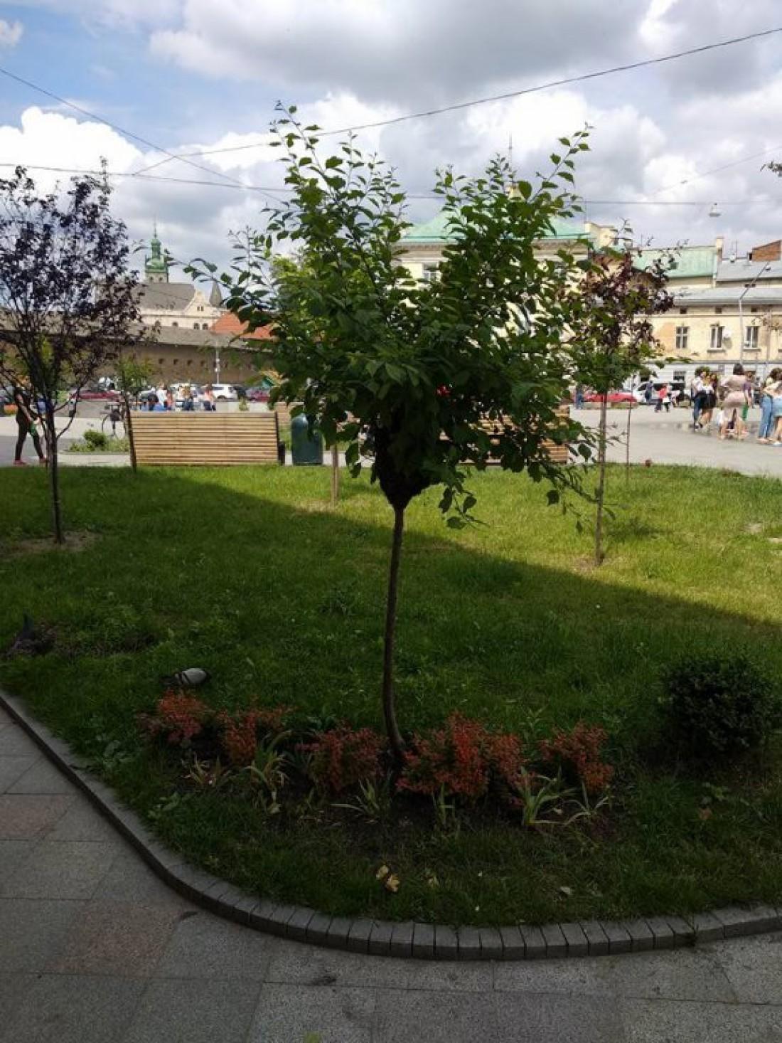 Рой диких пчел заметили на площади Мытной в центре Львова