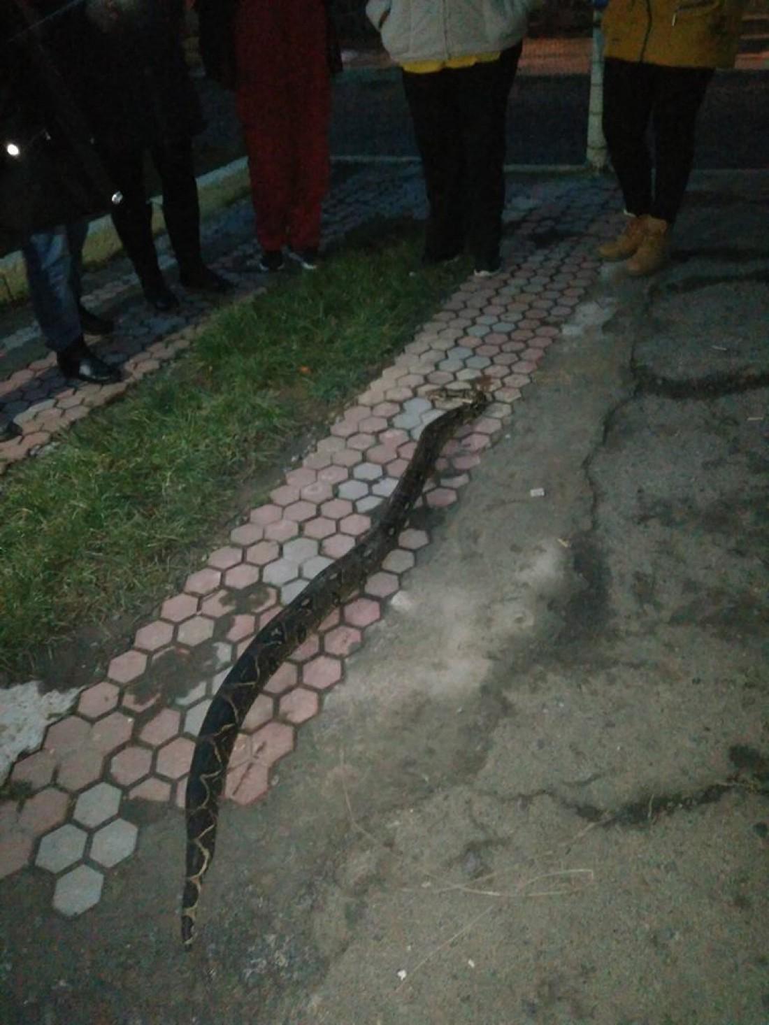 Неизвестно откуда змея появилась на дороге