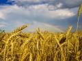 Погода на неделю: в Украине жара и дожди