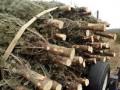В столице Таджикистана установят новогоднюю елку, несмотря на протесты мусульман