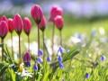 Какой праздник 23 апреля: важные события и интересные факты