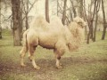 В Запорожье верблюд откусил палец посетителю парка