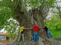 В Азербайджане древнее дерево упало на туристов