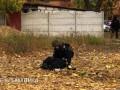 Стрельба в Харькове: у погибшего обнаружили арсенал оружия