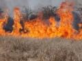 Под Киевом в сгоревшей траве нашли труп