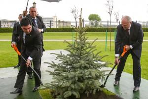 Лидеры Беларуси и Туркменистана поливали дерево во время дождя