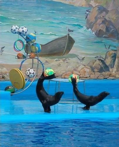 Морские котики из Немо